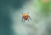 jak wygląda ugryzienie pająka