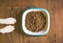 Jaką karmę dla psa kupić