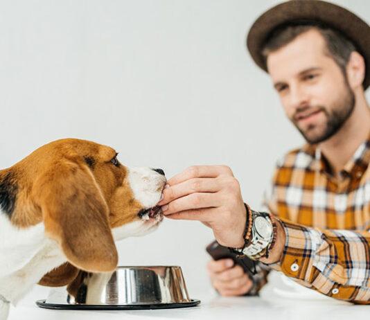 Zdrowe przysmaki dla Twojego psa