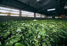 Jak zaprojektować halę rolniczą
